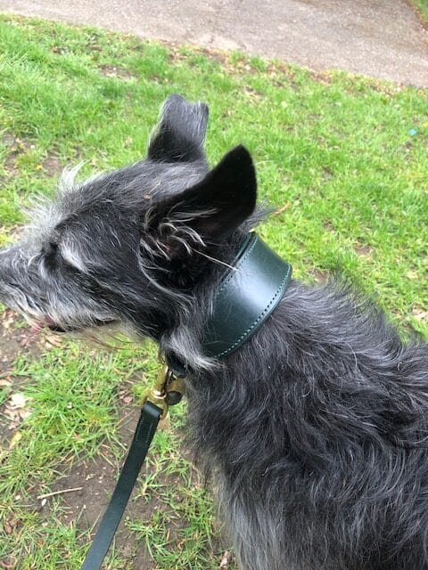 ESB Leather 45mm Green padded Classic hound collar with matching 20mm Green Classic lead