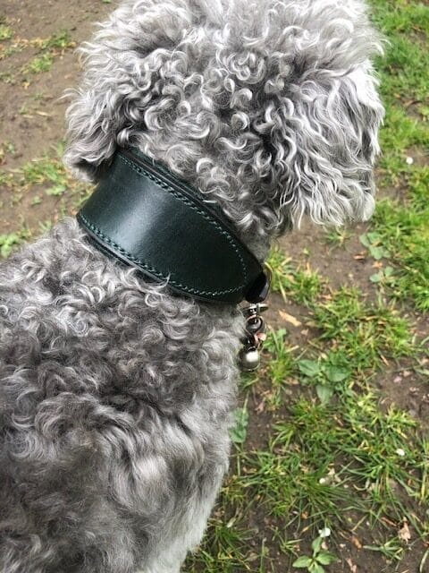 ESB Leather Green padded 45mm Classic hound collar